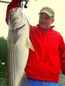 Lake Lanier Striped Bass 20+lbs
