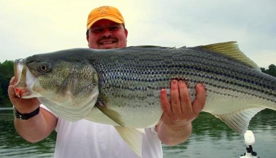 Milford striper fishing voleruav com for Milford lake fishing report