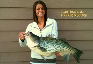 Lake burton record hybrid bass lake lanier fishing guide for Elaine b fishing reports